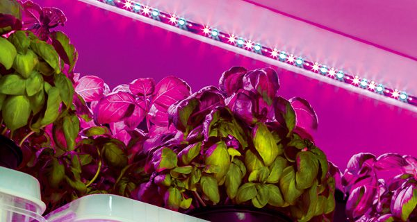 Horticulture lighting tuned for growing fruits and vegetables.
